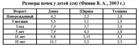 Таблица размеров почек у детей