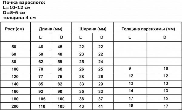 Таблица нормальных размеров почек
