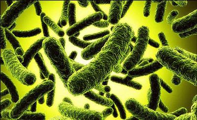 Патогенные вирусы и бактерии — частая причина дисбиоза у детей
