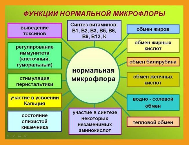 Функция нормальной микрофлоры кишечника