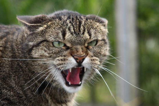 Чем опасен и к чему может привести укус кошки? koshka_agressiya