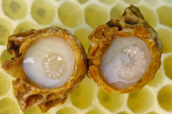 Пчелиное молочко при панкреатите