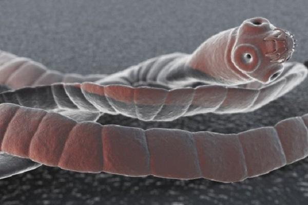 заражение человека паразитами