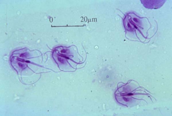 Микроскопические паразиты в водопроводной воде