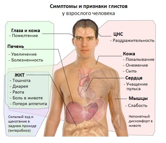 симптомы глистов у взрослого человека лечение