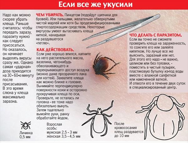Чем опасен лесной клещ для человека и как с ним бороться? lesnoy_klesh_chto_delat_esli_ukusil