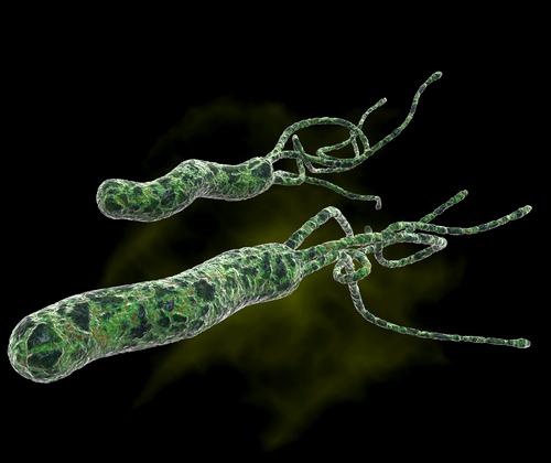 Как проводится лечение Хеликобактер Пилори? Helicobacter-pylori-