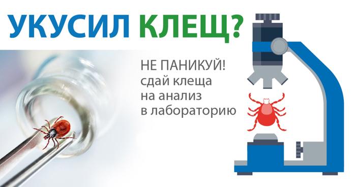 Куда обратиться в Москве если укусил клещ? kleshi_moskva