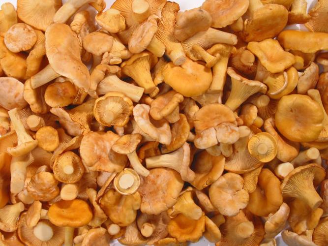 грибы лисички от паразитов отзывы врачей