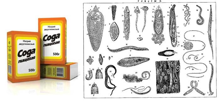 Сода изгоняет огромное количество видов глистов