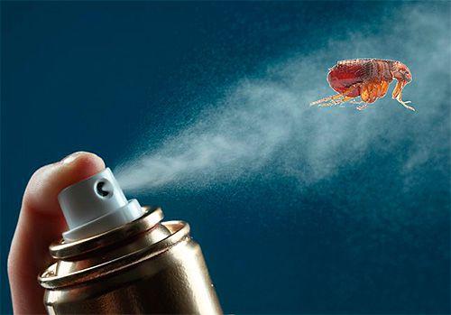 Эффективно ли лечение вшей и гнид дихлофосом? story_dihlofos_ot_bloh