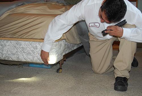 Клопы часто обитают под кроватью