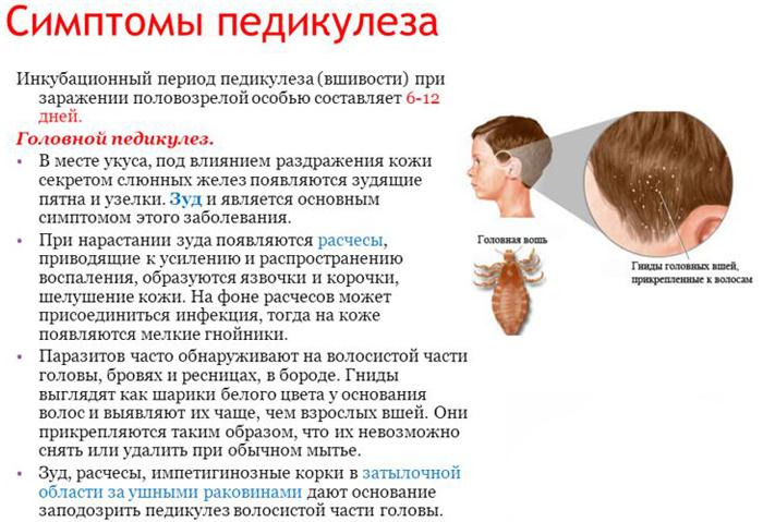Каковы признаки заражения педикулезом? simptomy_pedikuleza