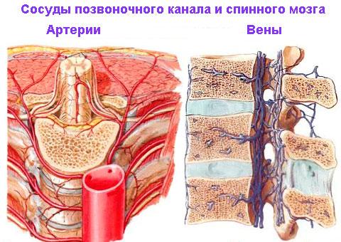 Чем опасен и как лечится стеноз позвоночного канала? sosudy-pozvonochnogo-kanala