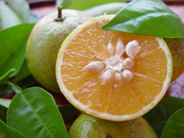 Горький апельсин в составе Липоксина