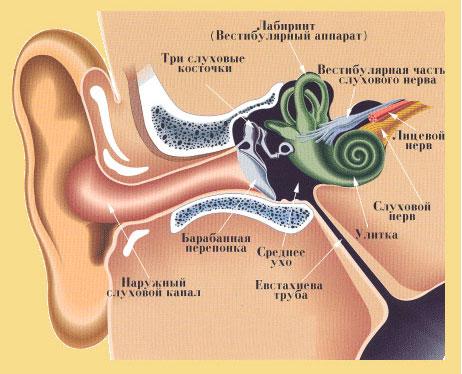Лечение шума в ушах при шейном остеохондрозе vestibuljarnyj-apparat