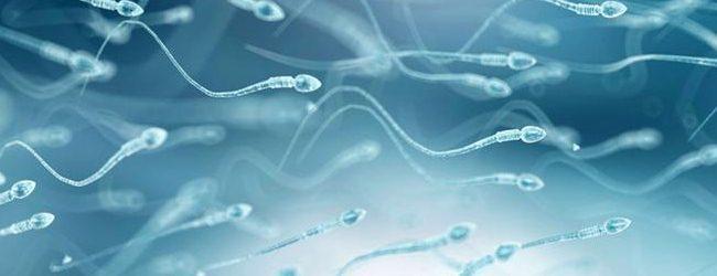 Сементал Бустер peremeshhenie-spermatozoidov-v-zhenskix-polovyx-putyax-1-1